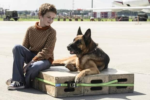 Самый верный друг: овчарка каждый день ждет Александра Домогарова в аэропорту