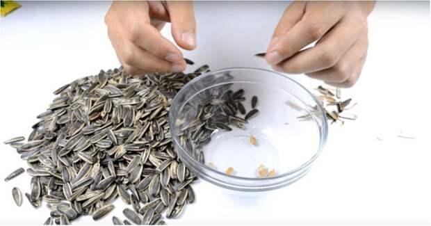 Как самому сделать автоматическую чистилку семечек Хитрость, видео, лень, прикол, своими руками, семечки