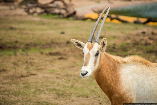 Китай, Гуанчжоу: сафари-парк Chimelong (Часть 1)