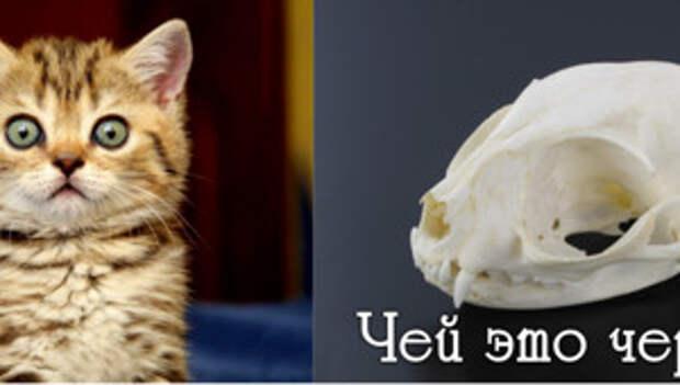 Тест: кому принадлежит этот череп?