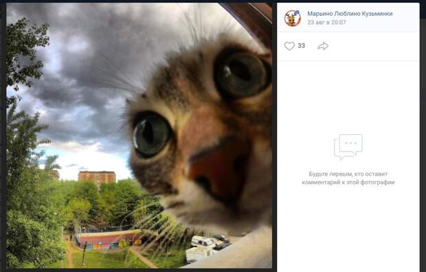 Кошку-беглянку из Марьино нашли спустя три месяца