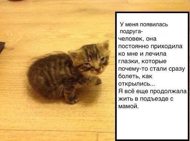 История одного котенка