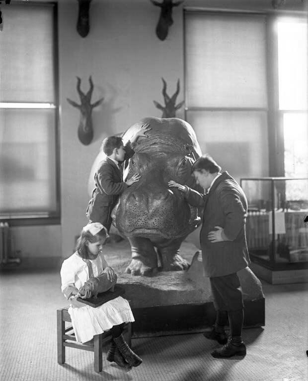 7. Слепые дети изучают гиппопотама в Американском Естественно–историческом музее, 1914 год. исторические фотографии, история, фото