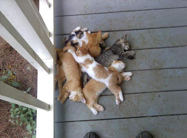 24. Вместе теплее котенок, сон