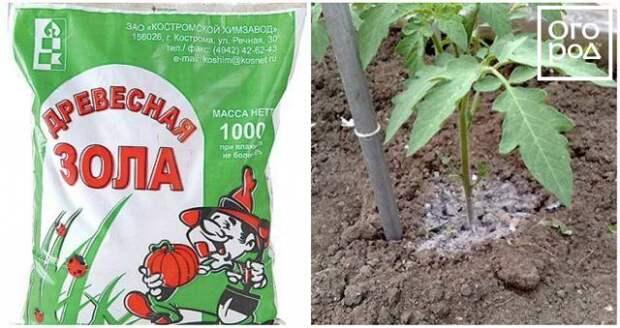 Подкормка помидоров древесной золой
