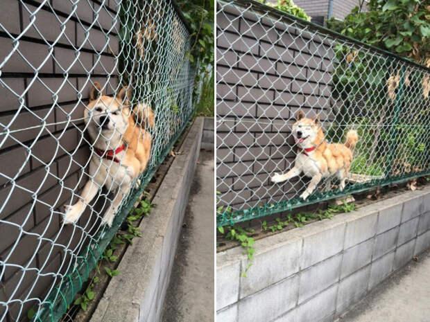 Застрявшие домашние животные смешные до слез (17 фото)
