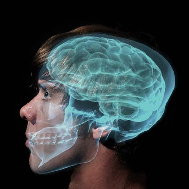 Впечатляющие факты о работе головного мозга. Будь осторожнее, прислушайся к факту № 32!