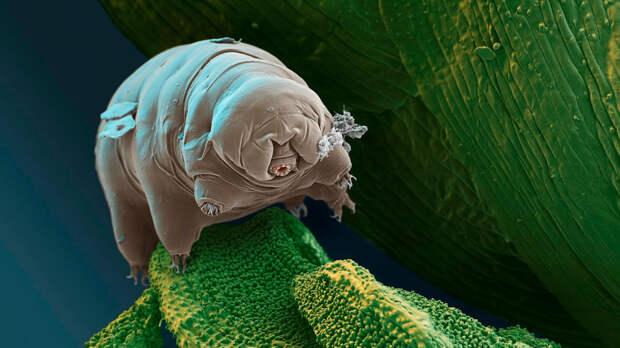 7 самых живучих существ на планете выживание, животные, наука