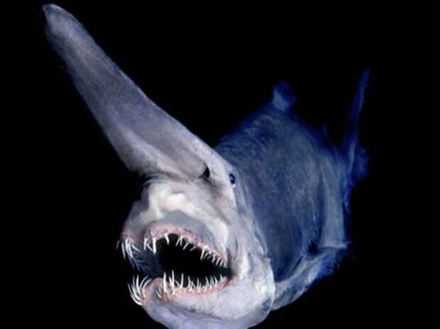 Зло таится под водой. Самые страшные морские создания