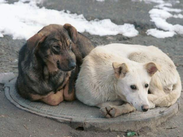 """Омское предприятие """"Спецавтохозяйство"""" будет отлавливать бродячих животных без конкурса"""