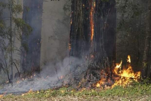 Самые крупные в истории Калифорнии лесные пожары не утихают вторую неделю