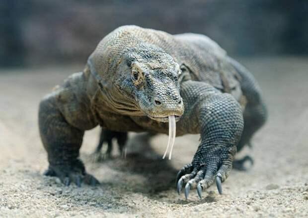 Мифическая реальность: 9 настоящих земных драконов
