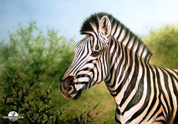 Реалистичные портреты диких животных