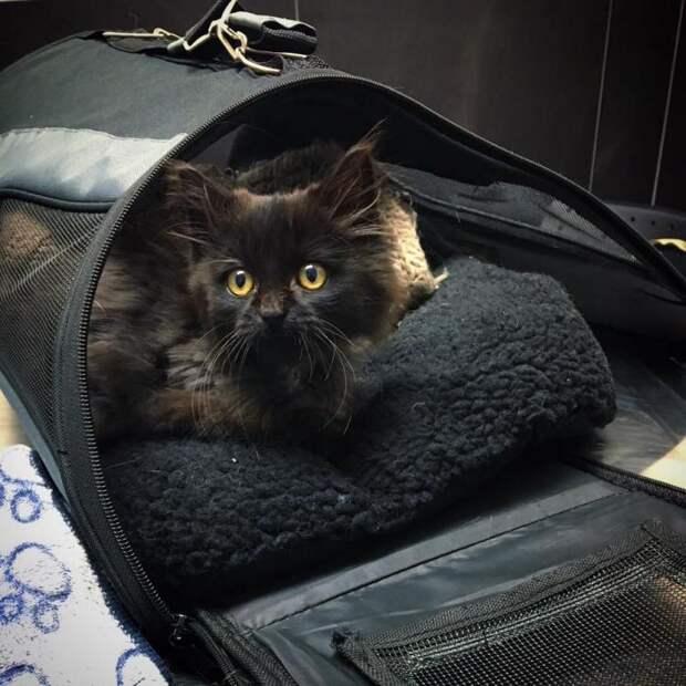 В канун дня всех святых, под окном появился дикий черный кот прямиком из преисподней