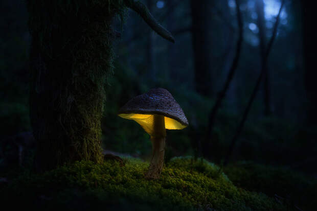 Светящиеся грибы