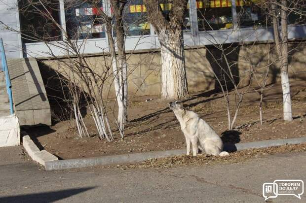 В Оренбурге и в двух селах ввели карантин по бешенству