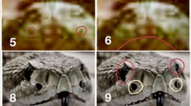 Американский профессор заявил, что обнаружил на Марсе змей и пчел