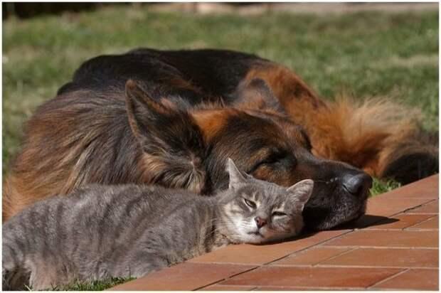 Кошки-собаки - вечные друзья-враги неразлучные