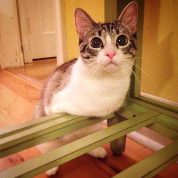 Хозяева отдали эту кошечку в приют из-за её недостатка. Но она все-таки обрела любящую семью…