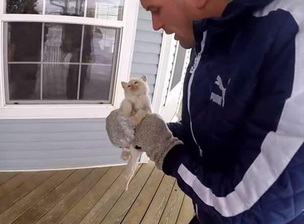 Когда котенка нашли, сердце его уже не билось  котенок, снег, спасение