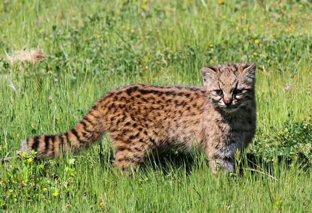 17 котов, о существовании которых знают не все