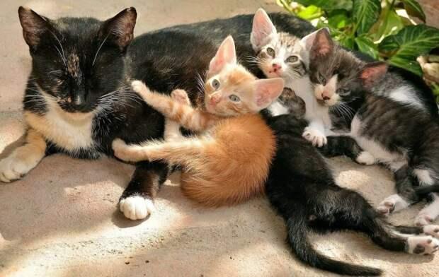 Как кошка хозяйку обманула, когда захотела спасти своих маленьких котят