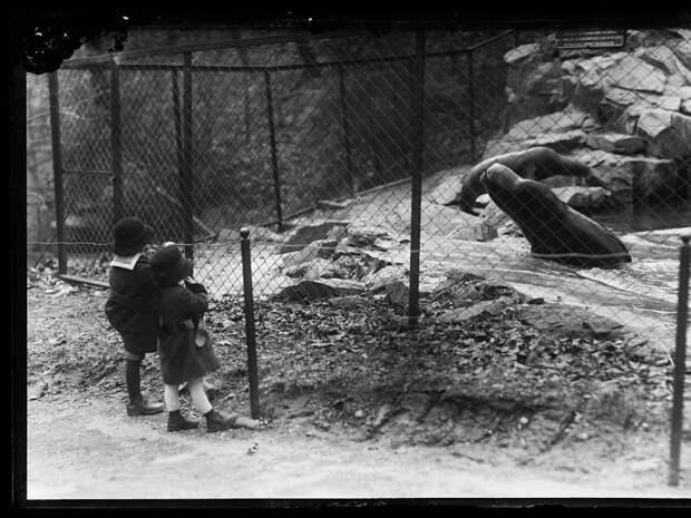 19. Наблюдение за тюленями животные, зоопарк