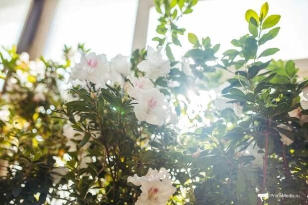 Тропики среди зимы: Ботанический сад Дальневосточного отделения Российской Академии Наук Ботанического сада, ДВО РАН, фоторепортаж