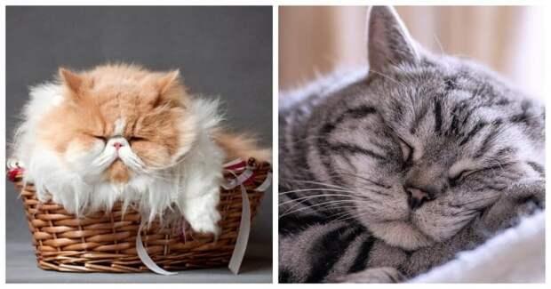 Мгновения радости: 10 вещей, которые очень любят коты и кошки