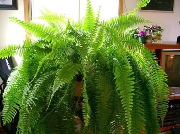 Самые модные комнатные растения 2020 года