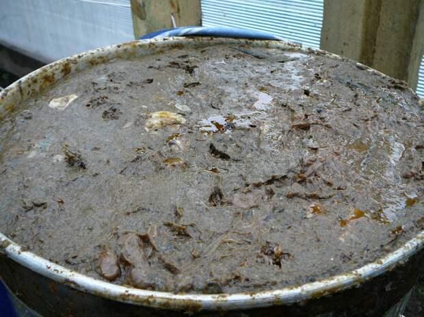 Вид неперемешанного гарума 8 июня. Рыбное сырье уже заметно расплавилось и приобрело коричневый цвет. Имеет умеренный рыбий запах с травами без смертельного зловония..