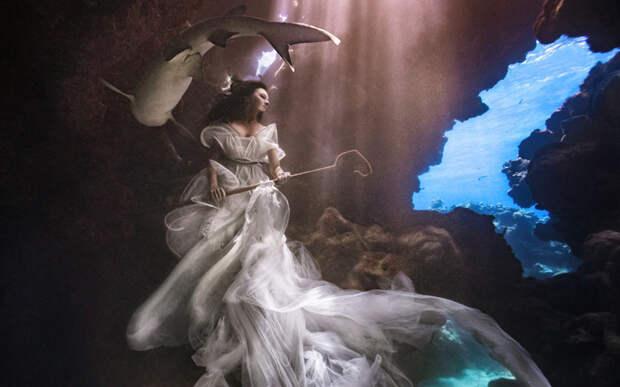 Акулья пастушка: опасный фотопроект, спасающий морских хищников