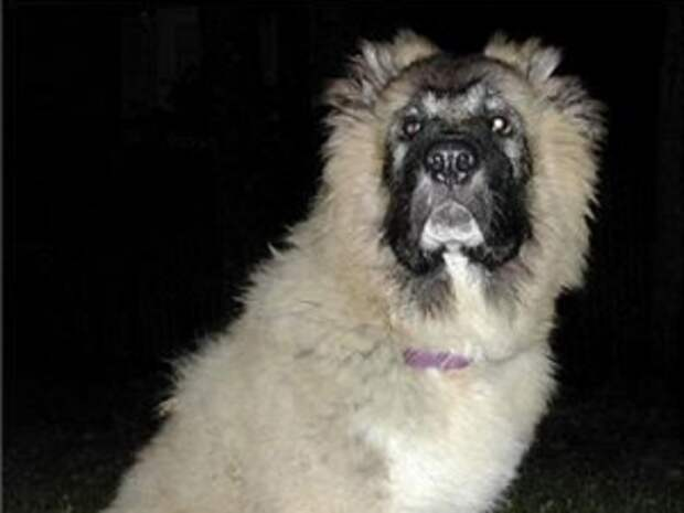 Женщина отсудила 30 000 руб. у друга своего мужа, чей пес искусал ее ребенка