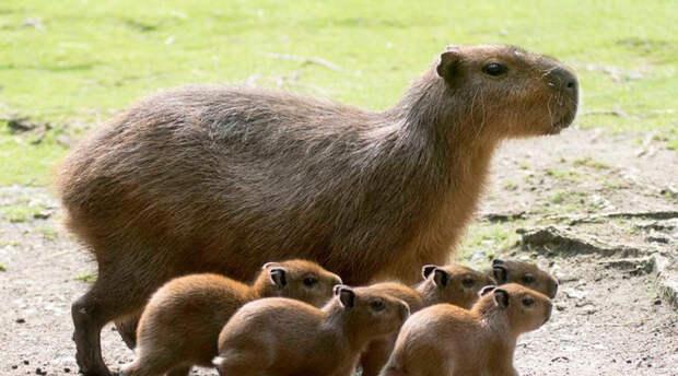 Животные, которые непонятно как появились
