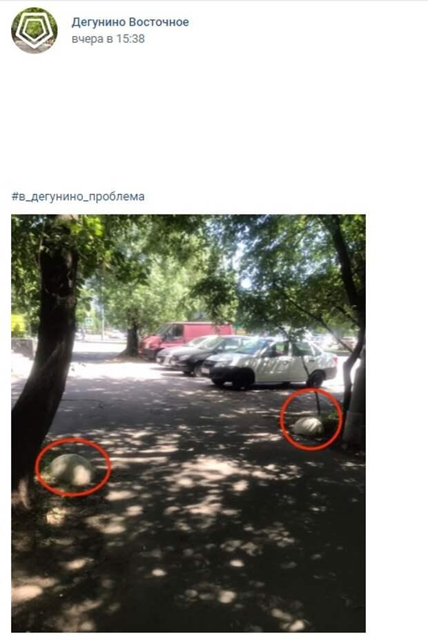 Полусферы на Дубнинской «бегают» по двору
