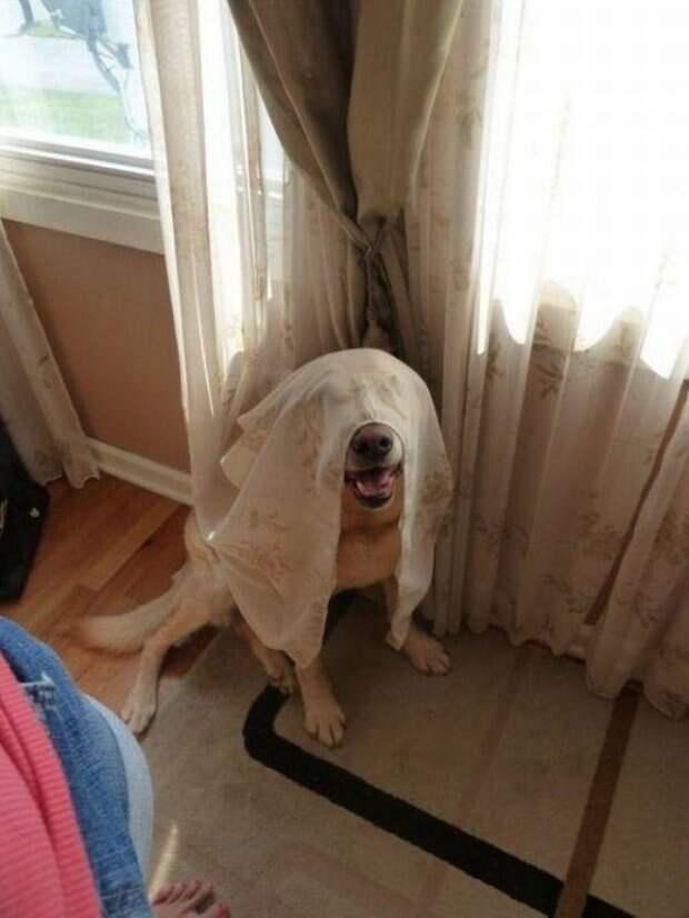 Собачки которые очень хотели спрятаться-14