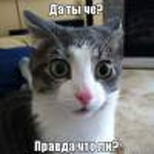 Кот_Кузя