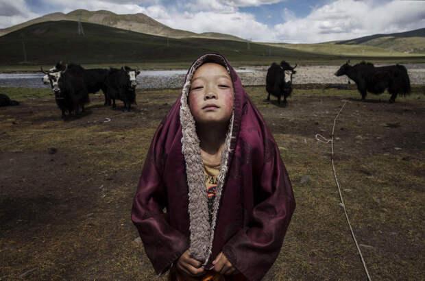 Конкурс Sony World Photography Awards 2016