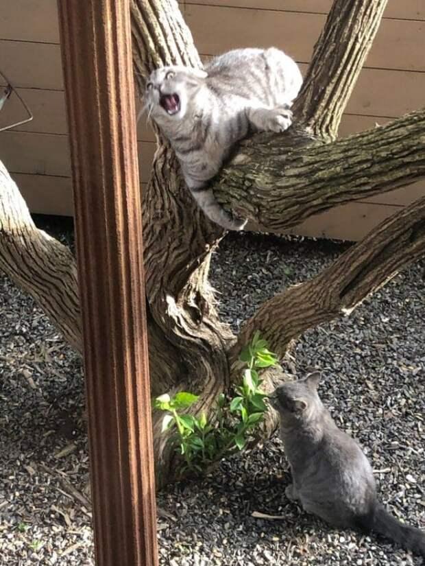 Забавные и немного сумасшедшие коты