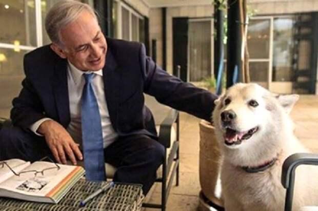Биньямина Нетаньяху с собакой.