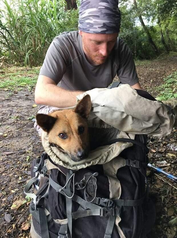 «Пёс не знал, что жизнь бывает доброй!» Чтобы спасти его, парень пошёл в непроходимые горы…