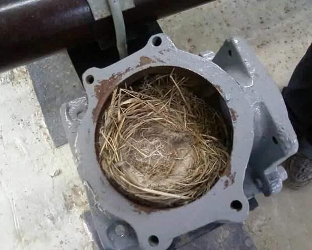 О людях и птицах гнездо, животные, история, птица, стройка