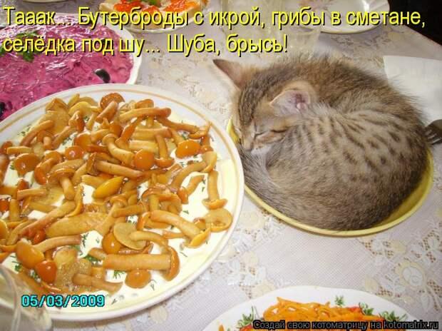 Котоматрица: Тааак... Бутерброды с икрой, грибы в сметане, селёдка под шу... Шуба, брысь!