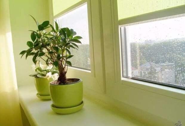 Самые полезные растения для дома ☝