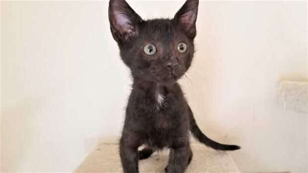 Семья приехала в приют, забрала кошку, а дома нашла в переноске милый сюрприз