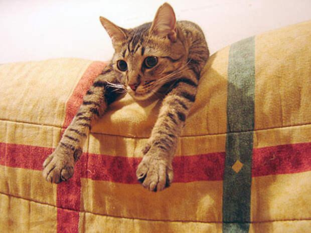 12.  кот, поза