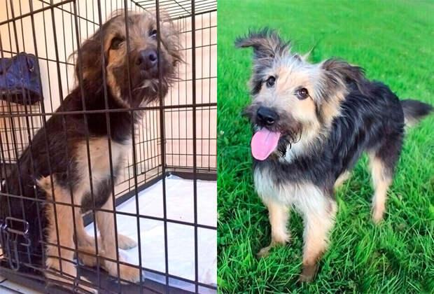 Жизнь животных до и после приюта