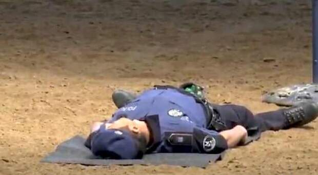 Пес приходит на помощь Полицейский пес, искусственное дыхание, новости со всего мира