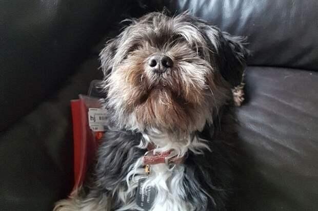 «Платите выкуп»: за найденную собаку у хозяина потребовали деньги, причем совершенно легально