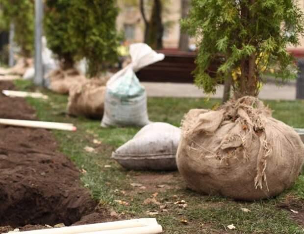 Волонтеры помогли храму на Ленинградке посадить деревья